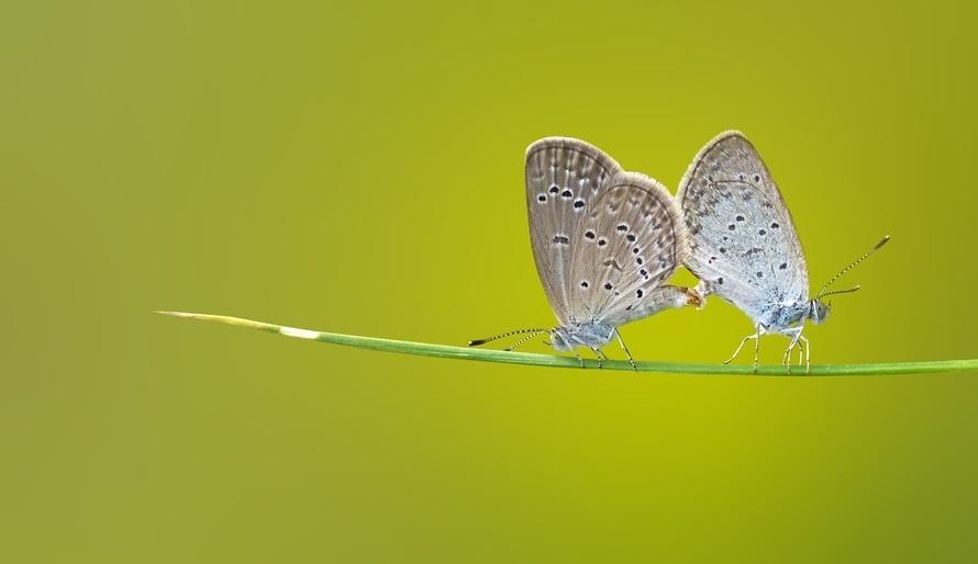 Chceš sa priateliť s motýľom, alebo s húsenicou?