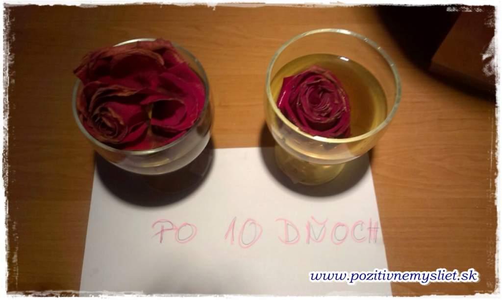 Pokus s ružou - PO
