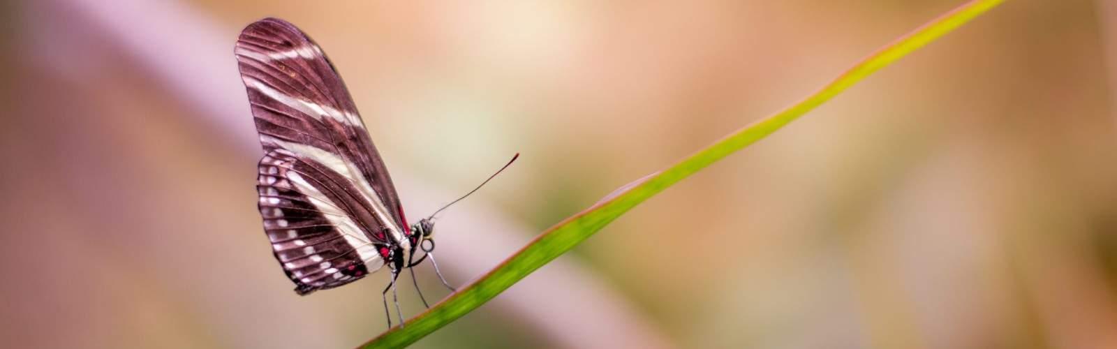 Motýľ - symbol pozitívneho myslenia
